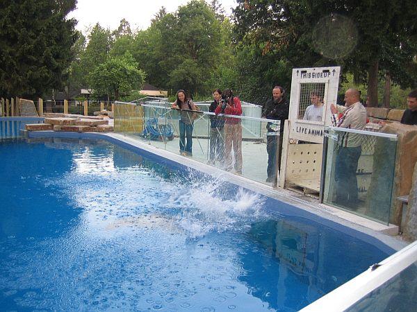Prvi skok v vodo