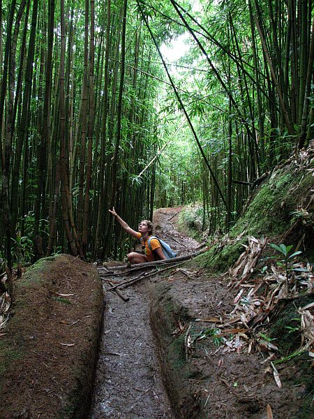 Bambusova džungla
