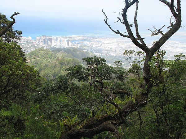 Pogled na mestno džunglo Honoluluja s pešpoti po pravi džungli