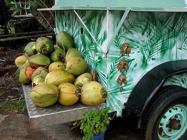 Kokosovi orehi