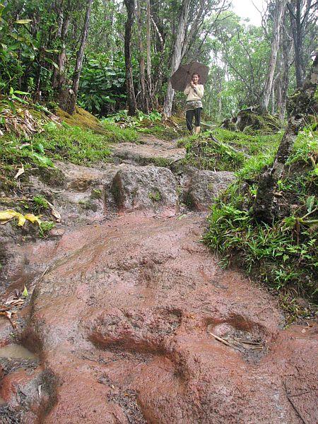 Večni havajski dež in blato