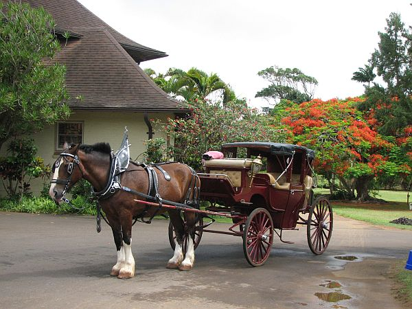 Konjska vprega pred razkošno kolonialno restavracijo