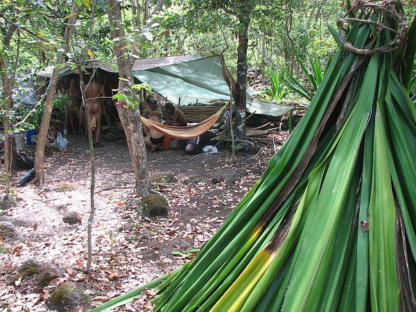 Hipiji v džungli Kalalaua