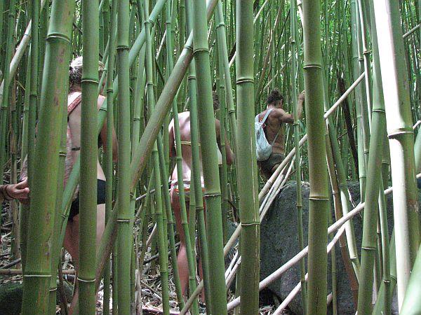 Prebijanje čez bambusovo džunglo v dolini Kalalau